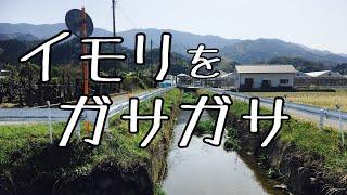 【ガサガサ】イモリ大発生!!