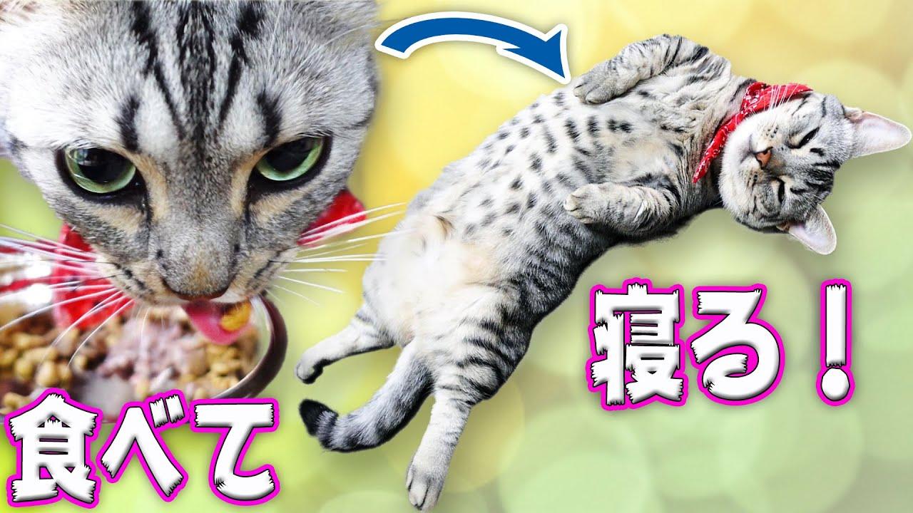 食っちゃ寝の怠惰な猫生活をのぞき見!
