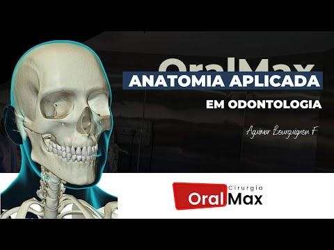 anatomia-aplicada-em-odontologia