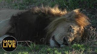 safariLIVE - Sunset Safari - September 15, 2018