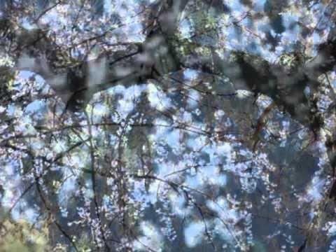 高麗の春  宮城道雄作曲  箏:菱田知子