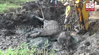 Baby elephant stuck in mud freed after 24-hour operation
