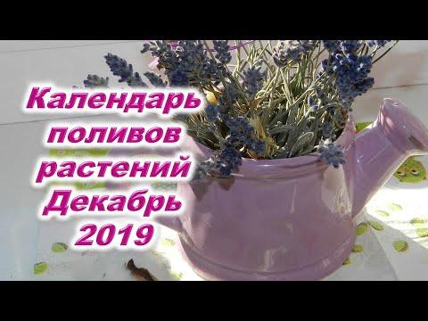 Лунный календарь поливов на декабрь 2019 года. Когда нельзя поливать комнатные цветы и тепличные рас