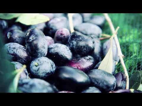 Messolongi Fields Ltd. Premium, Organic Olive oils and fine Greek food products