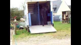 Gadys et la bétaillère le 070312.wmv