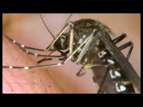 Deadly Mosquito-Borne Virus That Causes Brain Swelling Found In Florida