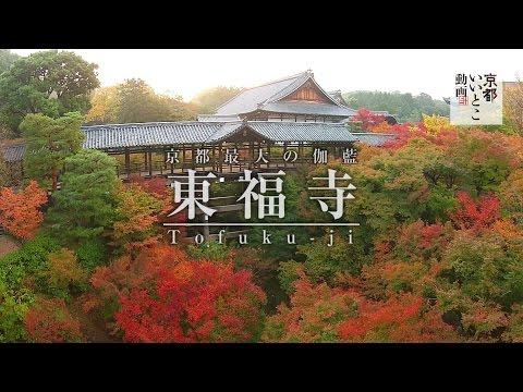 東福寺 Tofuku-ji / 空撮 紅葉 / 京都いいとこ動画