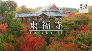 東福寺 tofuku ji 空撮 紅葉 京都いいとこ動画