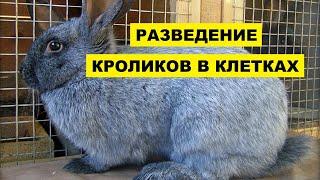 Разведение и содержание кроликов в клетках как бизнес идея | Кролиководство | Бизнес на кроликах