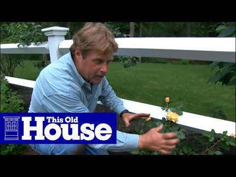 How To Choose And Plant Climbing Roses   This Old House   YouTube