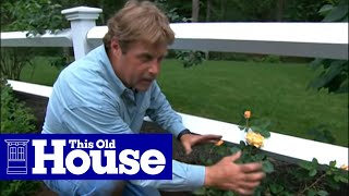 How To Choose And Plant Climbing Roses - This Old House