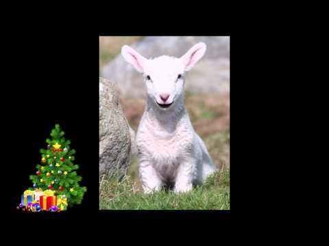 Talking Lamb - My Lovely Happy Kinds - Christmas Poem - Christmas 2016 Message! IOS Apple!