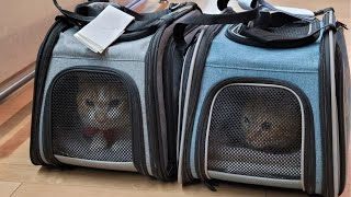Flying with 2 cats from Korea to France