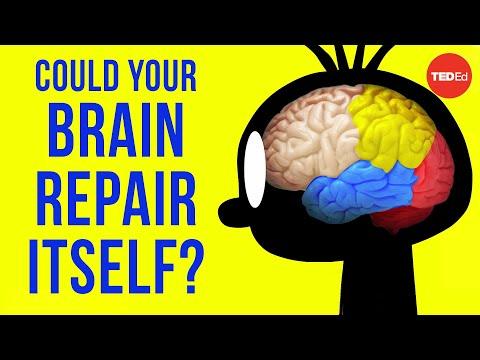 Can Brain Cells Repair Themselves
