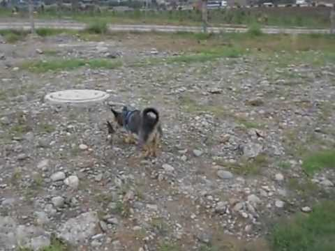 dog travel turkey in adana 14