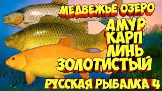 русская рыбалка 4 Амур Карп Линь Медвежье озеро рр4 фарм Алексей Майоров russian fishing 4
