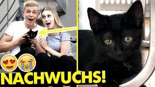 Wir bekommen NACHWUCHS! (Katzenbaby! 😍😭)