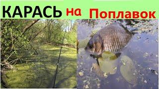 СЕКРЕТНОЕ БОЛОТО С КАРАСЕМ Рыбалка на карася 2020 Ловля карася в апреле Карась весной