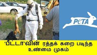 'பீட்டா'வின் ரத்தக் கறை படிந்த உண்மை முகம் | REAL FACE OF PETA | JALLIKATTU PROTEST