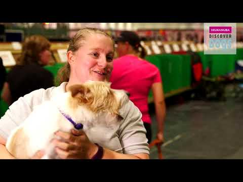 Crufts- Olly at Discover Dogs 2017