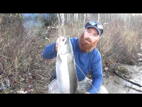 Solo Camping And Rainbow Trout Adventure (7 Of 12) - Fish ON!!!