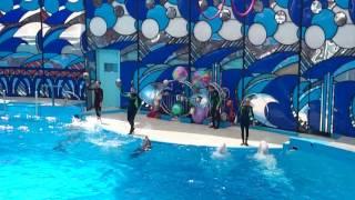 Выступление дельфинов )) Дельфинарий в Сочи(, 2016-06-26T20:28:44.000Z)