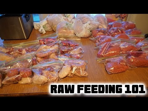 Raw Diet For Dogs 101 – Introducing Raw Meat To Your Puppy