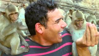 Thai Monkey Heaven