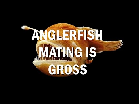 Anglerfish Mating Is Pretty Gross, Guys