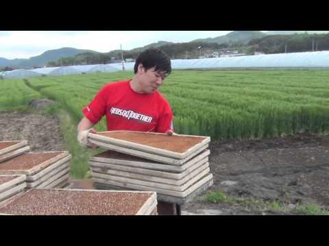 Vlog 7 - Working on the Farm - My Korean Husband