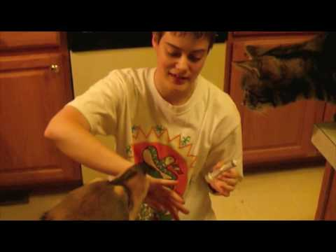 Pet Parent Files: Giving Liquid Dewormer to Dogs