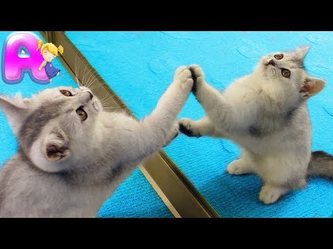 The Funny Kitten in the World