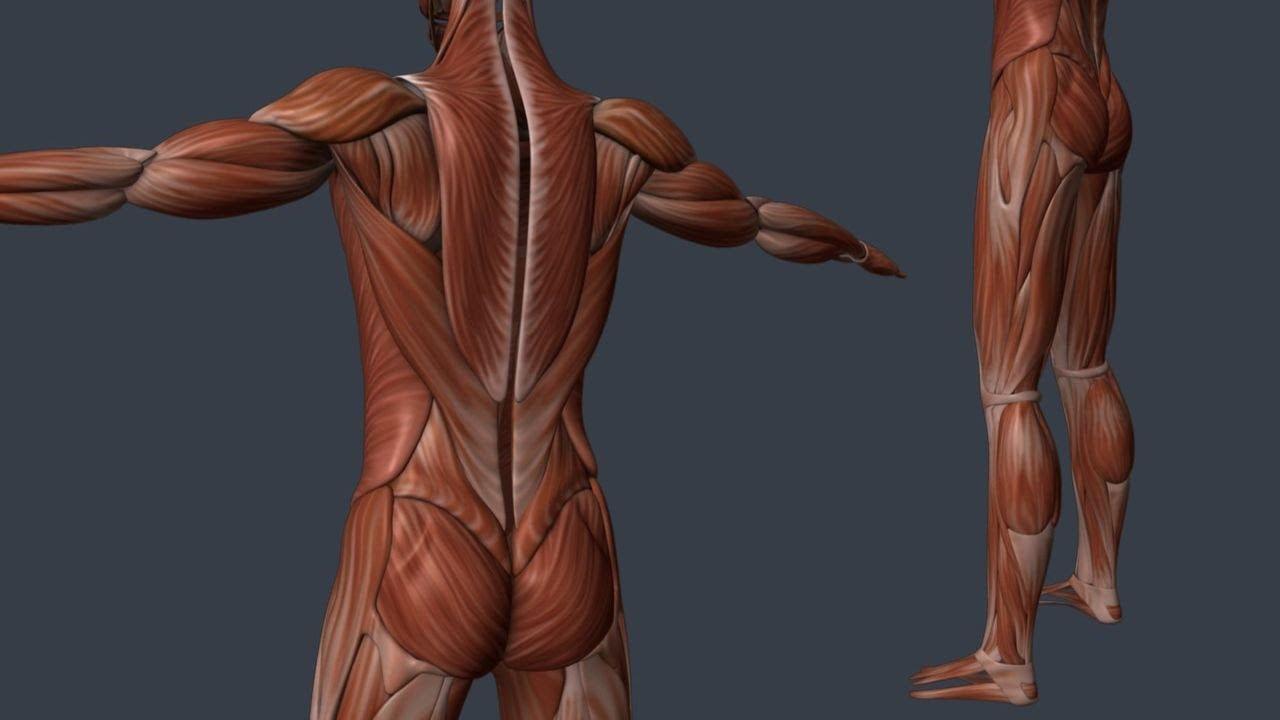 террористические картинки мышцы человека руками моторы мощности
