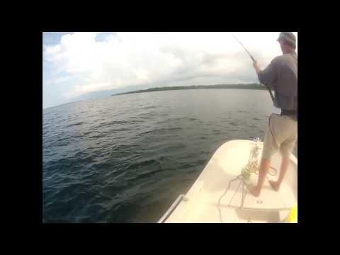 St. Andrews Bay, Panama City Beach, Hammerhead Shark