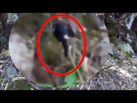 Странные существа снятые на камеру в лесу | неизвестные существа. жуткие существа в хорошем качестве