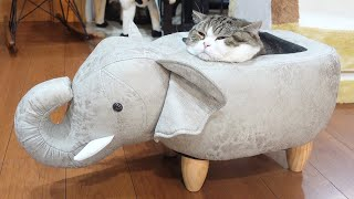 ゾウさんの中で溶けちゃったねこ。-Maru melted in the elephant.-