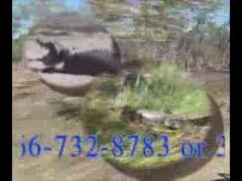 Water Buffalo Point Blank DVD Trailer