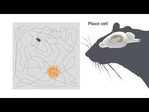 Explaining the Brain's Inner Map-Maker