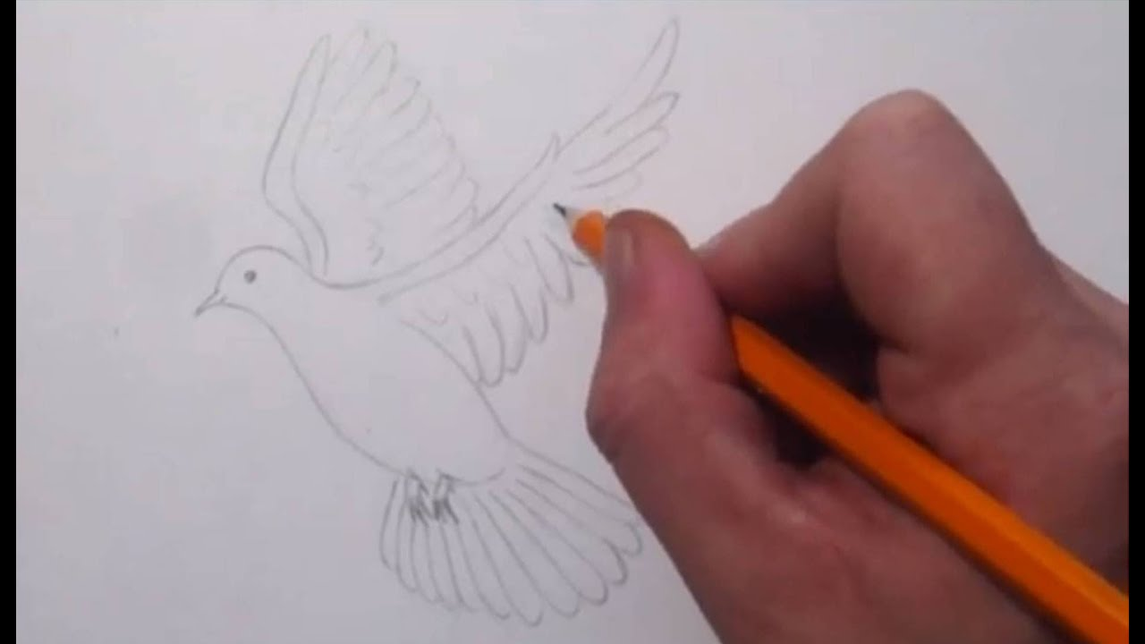 how to draw a dove youtube