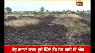 300 acers of wheat crop burns in Amritsar