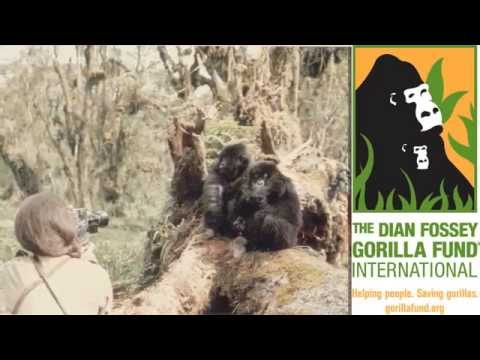 Dian Fossey Gorilla Fund: Gorillas need your help!