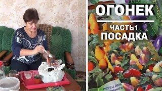 Как вырастить декоративный перец на подоконнике . Часть 1 - посев семян перца