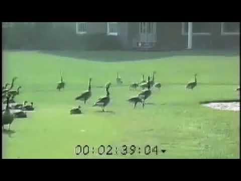 Bird-X GooseBuster Sonic Goose Repellent System