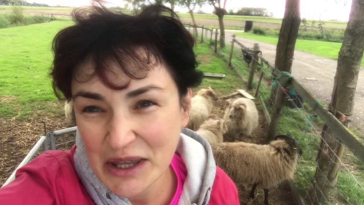 Как создать овечью ферму