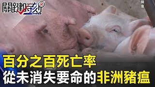百分之百死亡率 病毒從未在地球消失要命的「非洲豬瘟」! 關鍵時刻   20181213-5 朱學恒 王育敏