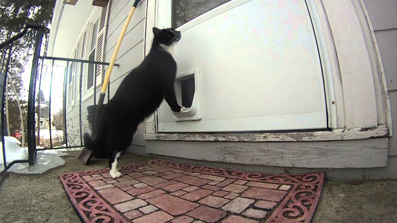 & Cat Door Bell - YouTube Pezcame.Com