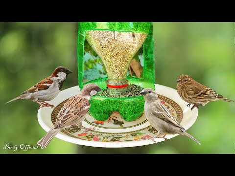 How To Make A Bird Feeder | DIY Homemade Plastic Bottle Bird Feeder