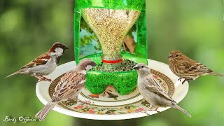 In this tutorial you will learn how to make a simple and easy soda bottle bird feeder for wild and pet birds at home. Best bird feeder