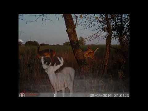Pennsylvania Trail camera pictures 2016