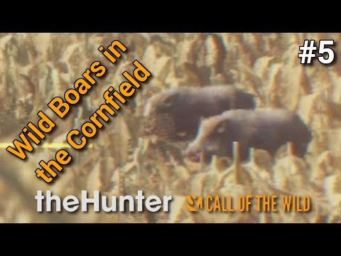 """theHunter: Call of the Wild - """"Wild Boars in the Cornfield"""" - MP with Pratze   Part 5 [1080p60fps]"""